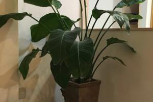 ジャングルナオミセ